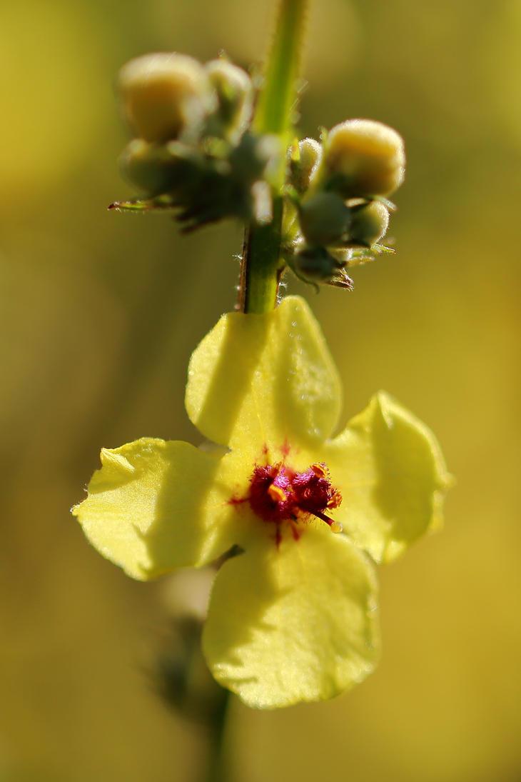 Yellow flower by luka567