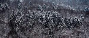 Slovenian Winter Forestscape