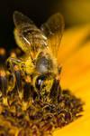 Honey-to-be