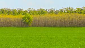 Lonely tree in Czech landscape