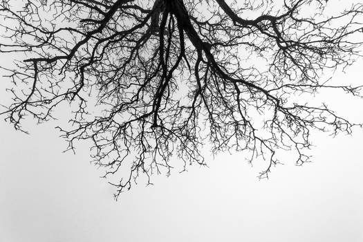 Branches above me on a foggy day