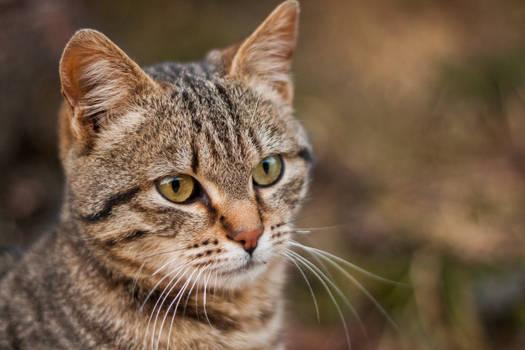 A beautiful kitten posing for a portrait