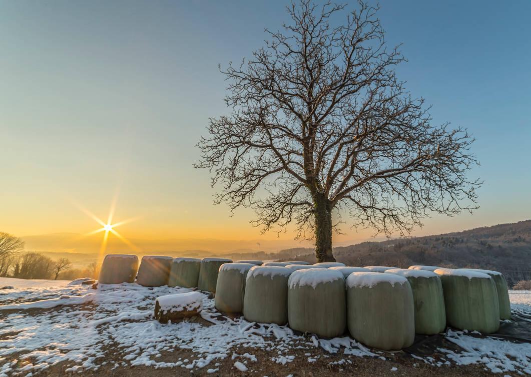 Sunrise over Walnut Tree in Slovenian landscape