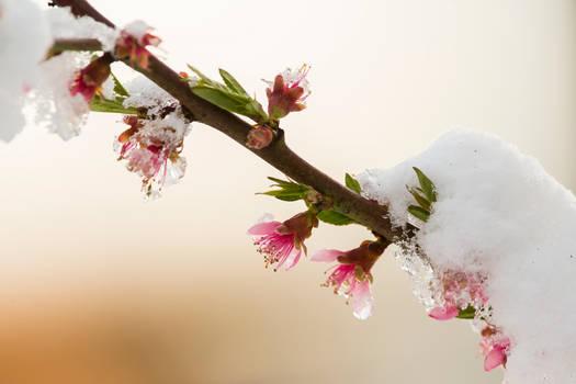 A snowy spring