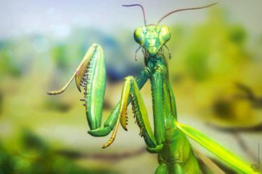 Mantis posed