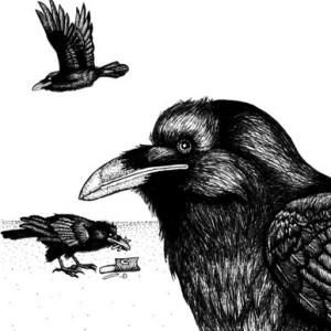 raven-amos's Profile Picture