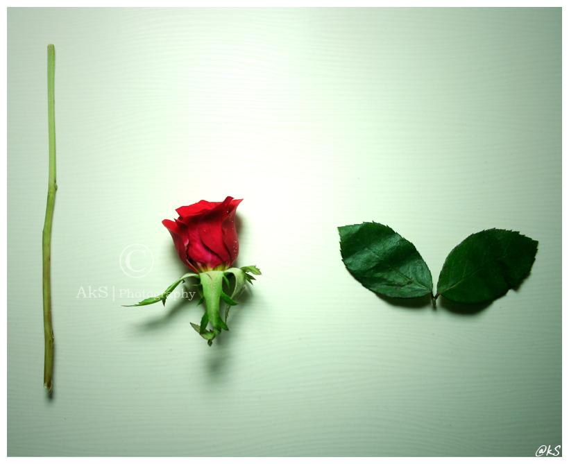 I love U by ahmedwkhan