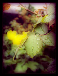 droplets...V by ahmedwkhan