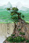 Juniper forest