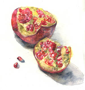 Watercolor sketch. Pomegranate