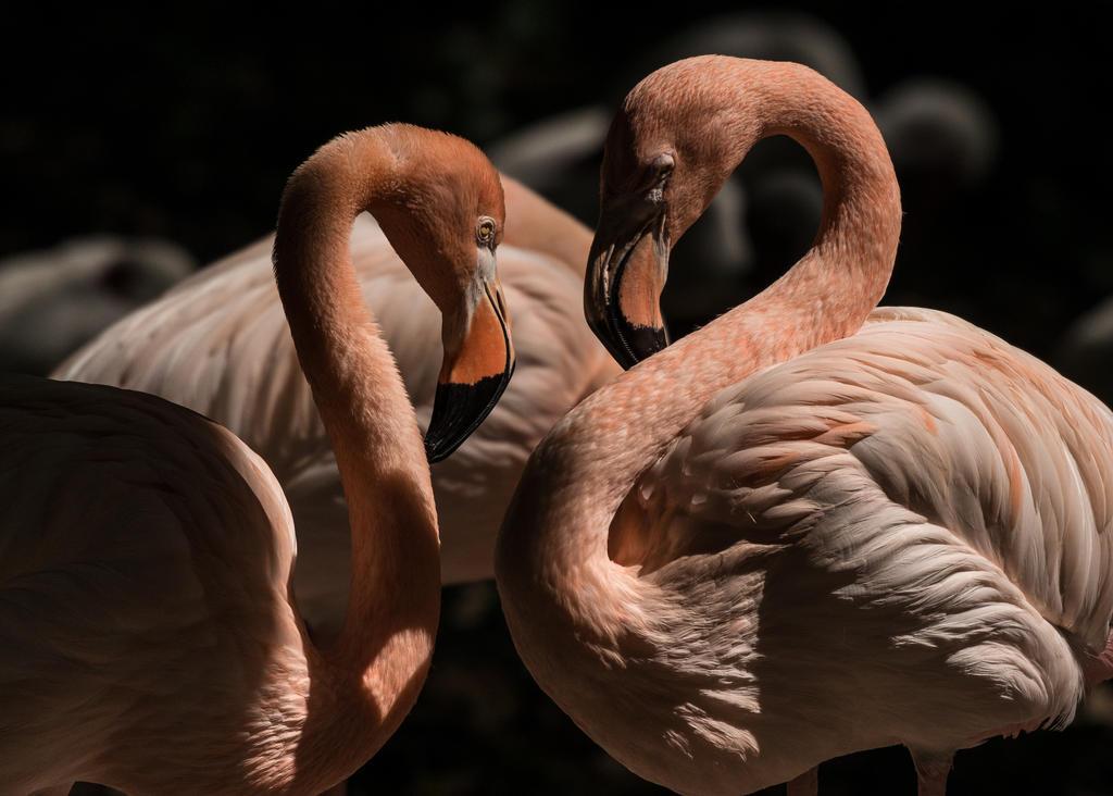 Tango Flamingo by SeamusHooligan