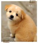 mao_mao by blu3corner