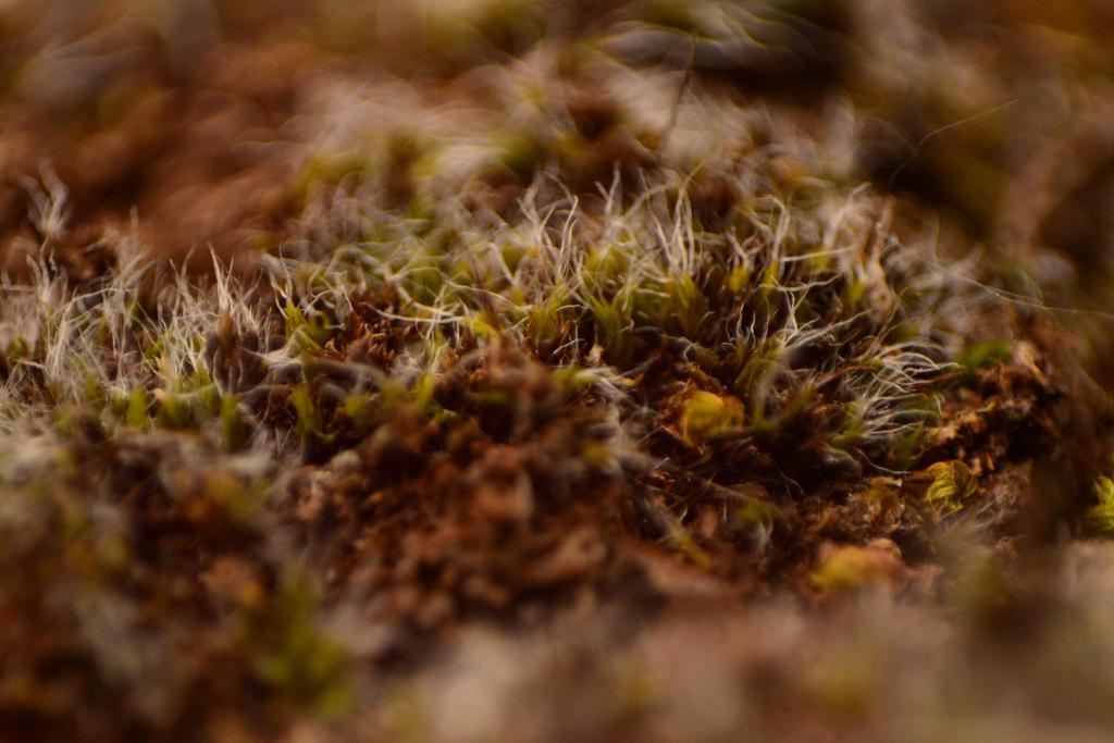 Lichen.1 by Kitty27Wolfe