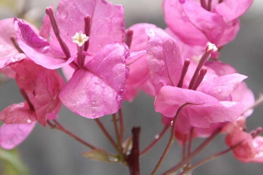 Good morning flower by moham11