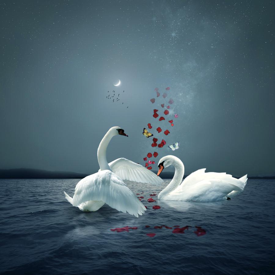 Открытки разворотом, лебеди открытки