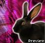 ID contest entry 12 - Dekae by RabbitClub