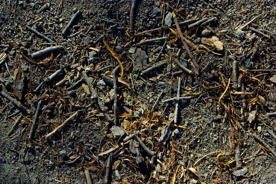 stock-twigs I by sevenbullsboy