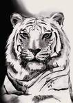 White Tiger by Shannie-Sketches