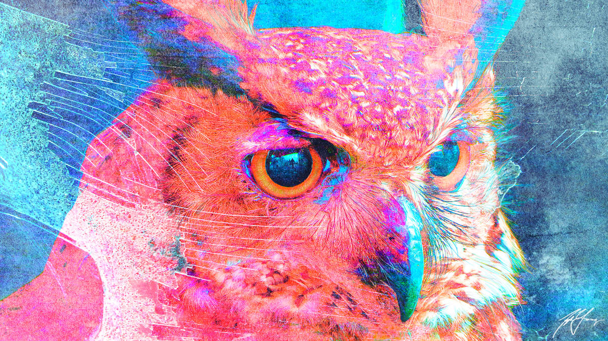 Eye's of an Archer by TylerCreatesWorlds