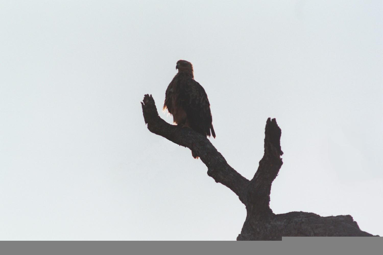 Eagle by taejo