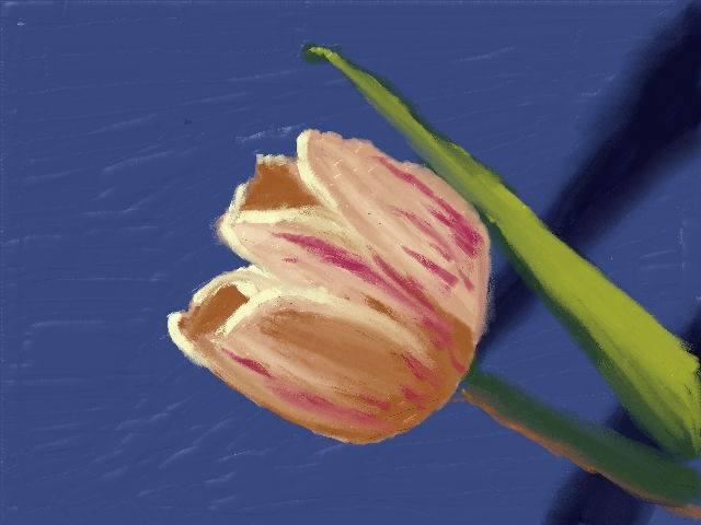 Tulip by nekomusume