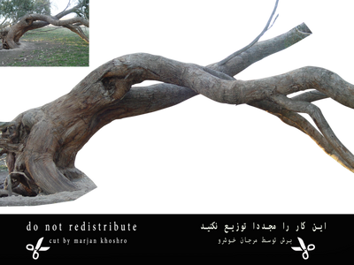 Trees Tree Trunk Branch Png 1 Cut By Marjan Khoshr by khoshro