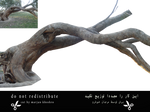Trees Tree Trunk Branch Png 1 Cut By Marjan Khoshr
