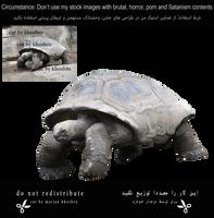 Giant-tortoise-1-cut By Khoshro by khoshro