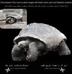 Giant-tortoise-1-cut By Khoshro