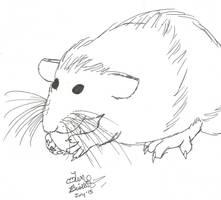 Sweet dumbo ratty