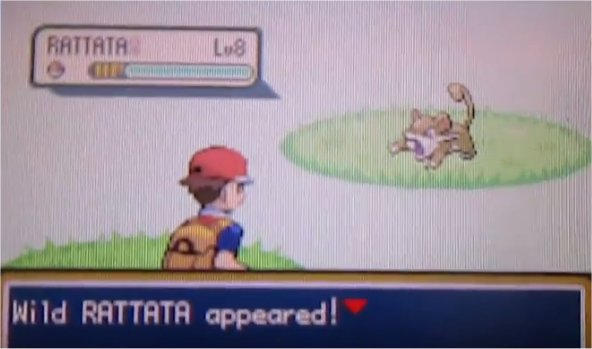 Different shiny rattata pic