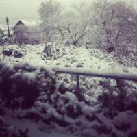 Snowy Bushy Lot by Scorpion31