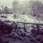 Snowy Bushy Lot