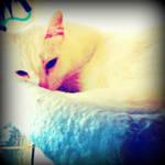 Beauty Resting Kittie