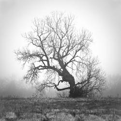 the dreaming tree by Essential-Insanities