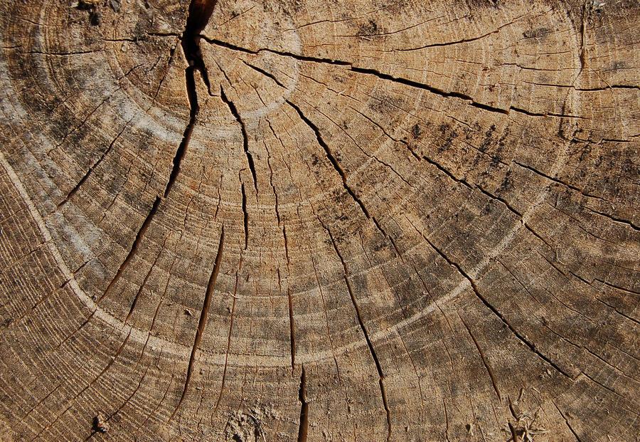 texture13 by weedstock
