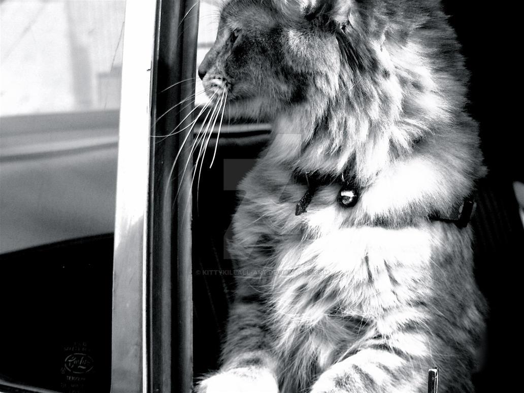 Chrome and Fuzz by KittyKillsAll