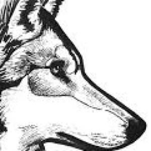 Heimii's Profile Picture