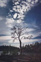 Karelia. Day 3. Grow to the sky by kiritani-akira