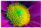 Pink, Purple, Green, Flower