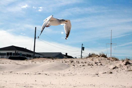 Beach Stock 03