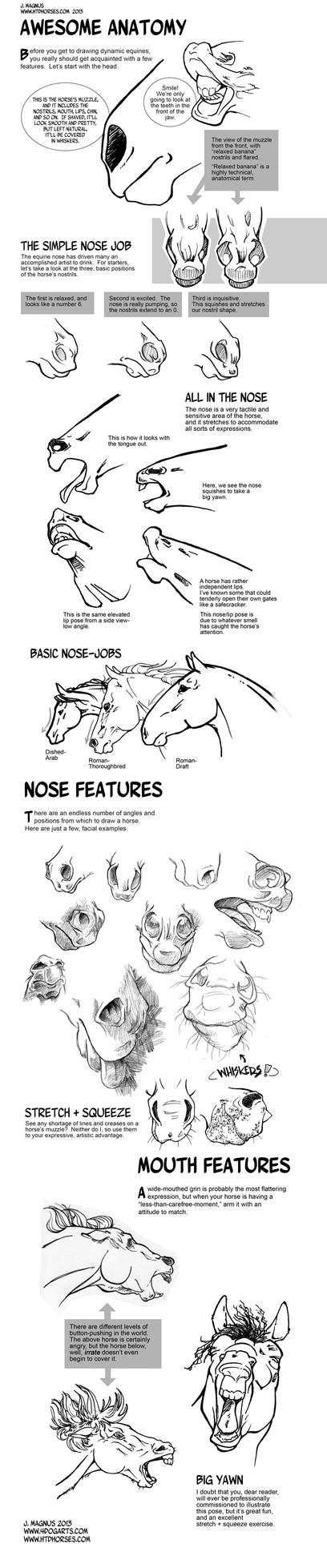 Horse Anatomy Part I by sketcherjak