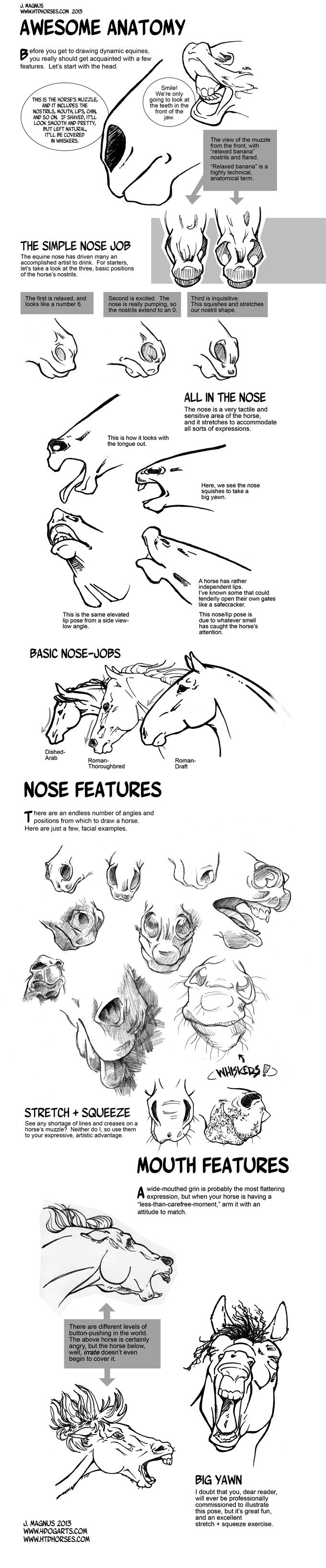Horse Anatomy Part I by sketcherjak