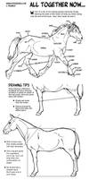 Horse Anatomy Part III - All Together Now