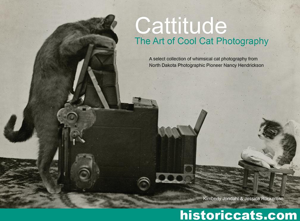 Cattitude by sketcherjak