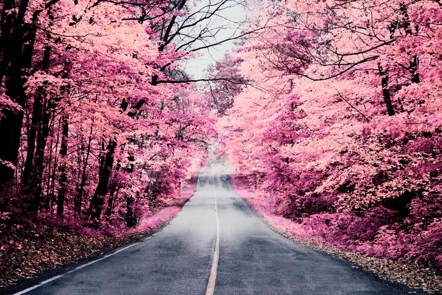 Pink fall by winterbutterfly81 on deviantart pink fall by winterbutterfly81 mightylinksfo