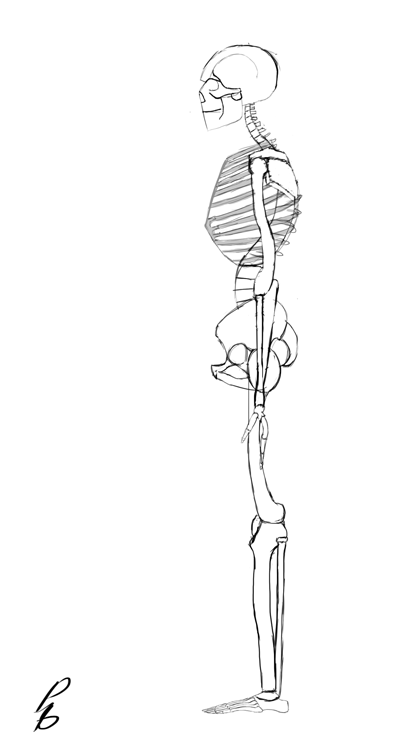 human skeleton, profile view by psychobolt on deviantart, Skeleton