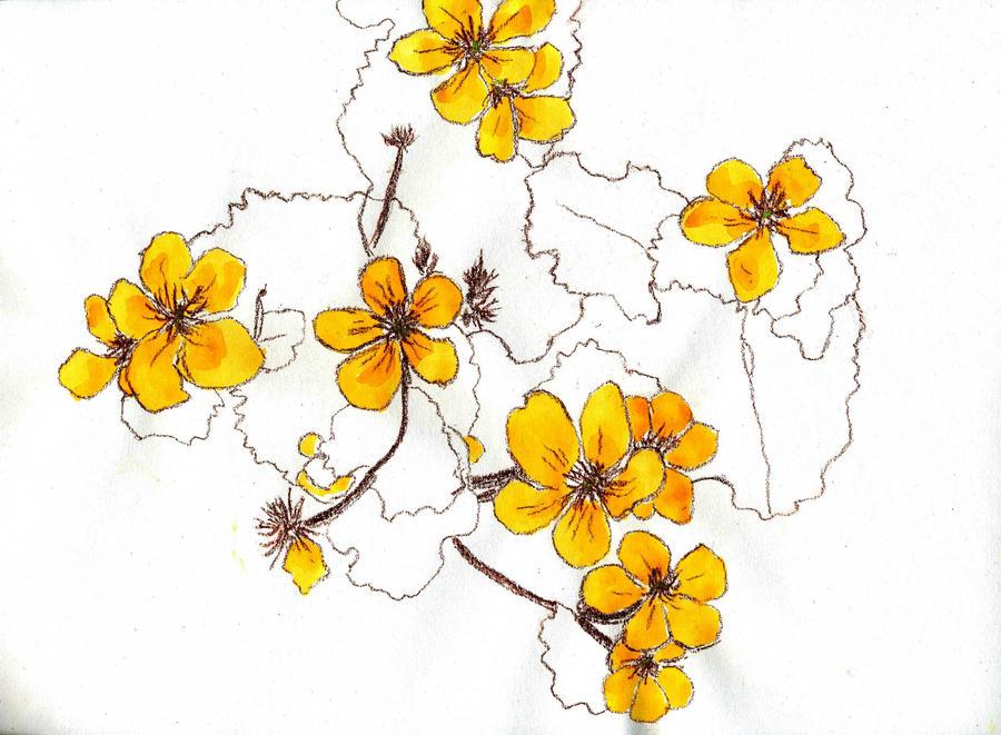 more marsh marigolds by merearthling on deviantART