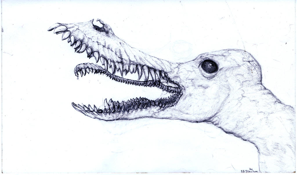 mad wolf drawings - photo #21