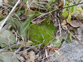 A Patch of Mossy Substance